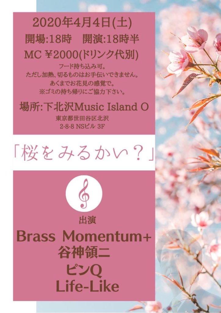 桜をみるかい?【夜】